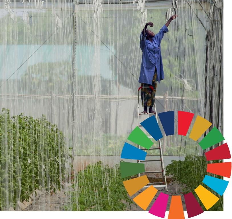 SDG Indicators